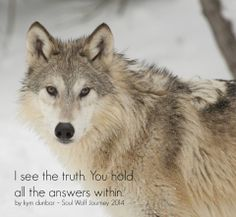 Gray Wolf--I See the Truth.  you Hold All the Answers Within--Kym Dunbar, 2014 Soul Wolf Journey Photo