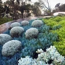Image result for coastal garden nz
