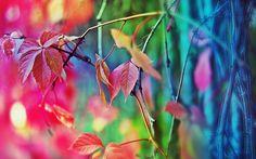 Hojas de otoño difusa Fondos de pantalla - 2560x1600