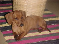No home would be complete without a pet daschund. If I had one, I'd call him Gomez