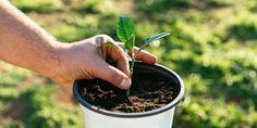 Home And Garden, Backyard, Flowers, Nature, Plants, Diy, Patio, Naturaleza, Bricolage