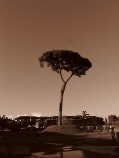 LDM_11 352 by Juan Manuel Arrecegor, via Flickr