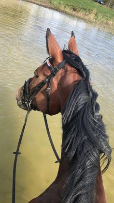 Horse Photos, Horse Pictures, Majestic Horse, Beautiful Horses, Arte Equina, Horse Anatomy, Horse Ranch, Horse World, Cute Little Animals