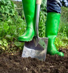 Vegetable Gardening Tips | Tips for Organic Gardening - The Tasteful Garden