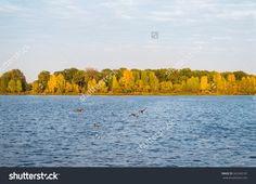 Autumn river with duck in the evening