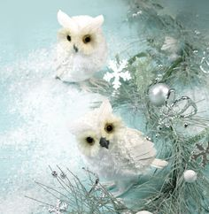 Owl #trend #white #snow #winter #Christmas