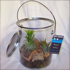 When you give air plants (a.k.a. Tillandsia) as a gift, it's all about aesthetic presentation. You can give the simplest of plants and make them look amazing if placed in the right package or container.