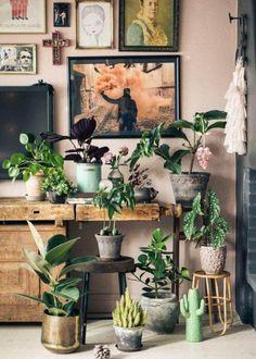 Zimmerpflanzen im indoor Garten arrangiert