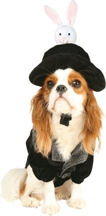 Hat Trick Magician Pet Costume Size Medium ** Be sure to check out this awesome product.