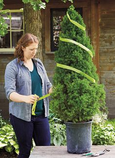 How to create a spiral topiary: Save money by learning how to create your own spiral topiary and provide your garden with a focal point that you can be proud of. Outdoor Topiary, Topiary Plants, Topiary Garden, Boxwood Topiary, Topiary Trees, Garden Shrubs, Outdoor Plants, Garden Planters, Garden Trees