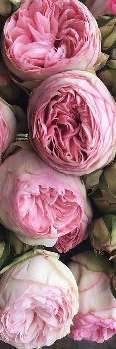Love Flowers, Wild Flowers, Beautiful Flowers, Love And Light, Peace And Love, Light Pink Rose, Flower Boutique, My Cup Of Tea, Refreshing Drinks