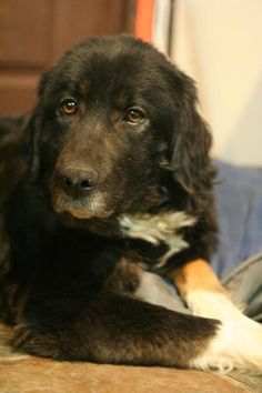 Coco Age : 4 years Breed : Bermese X Location: Edmonton Intake: July 2013 4 Years, Animal Rescue, Age, Animals, Animais, Animales, Animaux, Animal Welfare, Animal