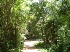 Bosque Reinhard Maack - Boqueirão - Curitiba | Bosque Renhard Maack no Guia de Tudo