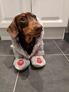 """Outstanding """"dachshund puppies"""" info is offered on our internet site. Check it out and you will not be sorry you did. Brown Dachshund, Dachshund Funny, Mini Dachshund, Weenie Dogs, Dachshund Puppies, Cute Puppies, Dogs And Puppies, Animals And Pets, Cute Animals"""