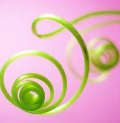 Spirals in plant tendrils.