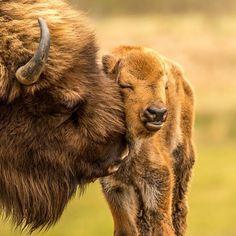 25 cute animal pictures that improve your mood immediately - Haustiere - Animals Wild Nature Animals, Farm Animals, Animals And Pets, Wildlife Nature, Animals Images, Rainforest Animals, Strange Animals, Animal Bufalo, Wildlife Photography