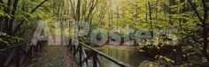 Footbridge Over a Pond in a Forest, Cucumber Run, Ohiopyle State Park, Pennsylvania, USA by Panoramic Images Landscapes Photographic Print - 107 x 36 cm