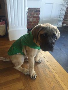 George & his green coat