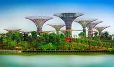 singapore gardens by the bay - Google Search