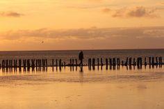 Lise liebt... Das Wattenmeer. Wadden sea - stinteck