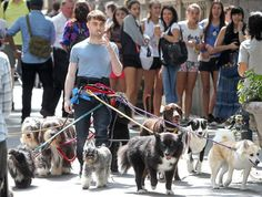 Daniel Radcliffe has a new job! And he's totally killing it. Here Is A Picture Of Daniel Radcliffe Walking 12 Dogs While Smoking A Cigarette Daniel Radcliffe, Funny Harry Potter Pics, Ron Y Hermione, Fandoms, Voldemort, No Me Importa, Fantastic Beasts, Hogwarts, Animals
