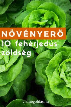 Egészséges táplálkozás - Növényerő: 10 fehérjedús zöldség Tahini Pasta, Brigitte Lindholm, Easy Brunch Recipes, Brunch Menu, Chicken And Waffles, Food For A Crowd, Lettuce, Easy Meals, Keto