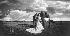 Welcome - Cara-lee Gevers Creative Wedding Photography, Elephant Love, Elephants, Africa, Horses, Animals, Photo Studio, Animales, Animaux