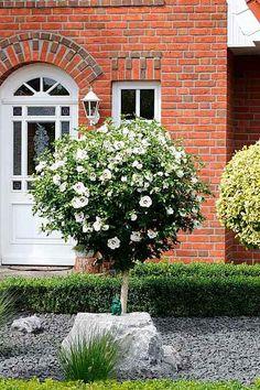 Die 77 besten Bilder von Garten | Garten, Pflanzen und ...