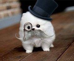 'Ello sir!