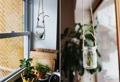 air plants in jars Tall Plant Stands, Modern Plant Stand, Wooden Plant Stands, Diy Plant Stand, Stand Tall, Plants In Jars, Tall Plants, Hanging Plants, Best Indoor Plants