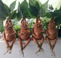 Harry Potter Mandrakes by Chrystal Brower. Professor Sprout and Professor… disfraces harry potter Mandrake Harry Potter Halloween, Cosplay Harry Potter, Harry Potter Birthday, Harry Potter Navidad, Harry Potter Weihnachten, Harry Potter Fiesta, Harry Potter Mandrake, Décoration Harry Potter, Harry Potter Christmas Decorations