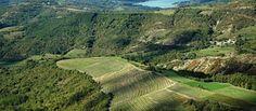 Istrien unter den Top 10 Wein-Reisezielen 2015 weltweit http://www.inistrien.hr/aktuelles/istrien-unter-den-top-10-wein-reisezielen-2015-weltweit/ #Wein #Reisen #Istrien #Kroatien #Urlaub
