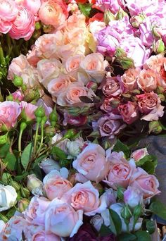 "hannahandfay: ""Pretty roses """