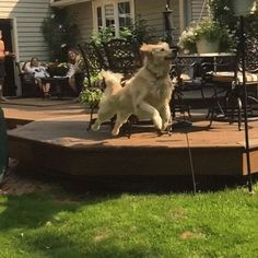 These Dogs Weren't Even Close To Catching The Ball, And It's Hilarious Afv Funny Videos, America's Funniest Home Videos, Dog Videos, Funny Dogs, Cute Dogs, Funny Animals, Cute Animals, Game Mode, Animal Pictures