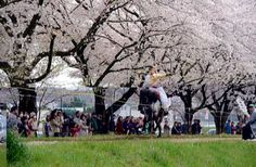 Witness traditional Japanese horseback archery backdropped by hundreds of beautiful Cherry Blossoms at that Cherry Blossom  Festival in Arashiyama Valley | RANZAN
