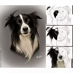 Beautiful Pencil Drawings- various stages of work in progress. Animal Sketches, Animal Drawings, Art Sketches, Watercolor Animals, Watercolor Art, Border Collie Art, Animal Art Projects, Color Pencil Art, Pencil Art Drawings