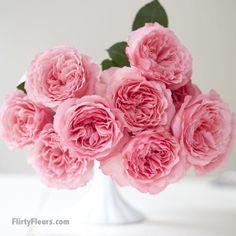 Flirty Fleurs Pink Garden Roses Study with Alexandra Farms - Mayra's Rose, pink garden rose David Austin Roses, Color Magenta, Kids Yard, Pink Garden, Garden Roses, Pink Bouquet, Bouquet Flowers, Cut Flowers, Rose Vase