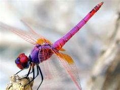 Who said orange and purple dragonflies were made up in my head! Loves