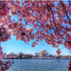 @beautifuldestinations D.C. in the Spring