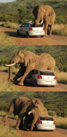 The elephant had an itch to scratch.