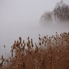 Fog | Whitney Hayes