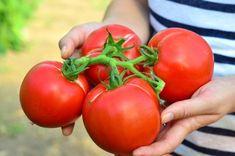 Nu-și mai încap în piele! Home And Garden, Vegetables, Cooking, Paradis, Food, Diversity, Gardening, Google, Home
