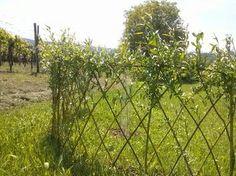 Update: Lebendiger Zaun aus Weiden