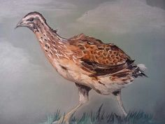 08.01.2014 Bird Oil on canvas 30x40 Sold
