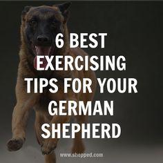 6 best exercising tips for your #germanshepherd
