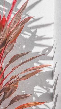 HD wallpaper Cooper Copii: Most beautiful nature wallpaper for everyone Wallpaper Pastel, Aesthetic Pastel Wallpaper, Trendy Wallpaper, Tumblr Wallpaper, Pretty Wallpapers, Nature Wallpaper, Aesthetic Wallpapers, Phone Wallpapers, Leaves Wallpaper