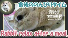 食後ののんびりタイム【ウサギのだいだい 】 Rabbit relax after a meal. 2016年3月7日