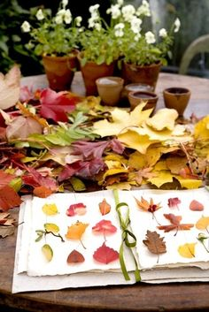 collecting & pressing leaves