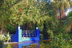 Jardin Majorelle, Marrakech, Morocco par Andy Latt
