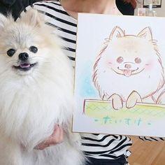 5月からトリミングサロンに動物病院が併設され、今日はプレオープンのイベントへ行ってきました(о´∀`о)🎵 . イラストレーターからたまさんに絵本のイラスト風に可愛く描いていただきました❤ しかも先着20名予約制でなんと無料で…。 . . #ポメラニアン#ポメ#ぽめらにあん#犬#愛犬#ペット#いぬ部#いぬら部#ふわもこ部#もふもふ部#いぬばか#いぬばか部 #犬ばか#ウルフセーブル #pomeranian#pome#pom#dogs#pet #トリミング#トリミングサロン#アラモード #リミングサロンalamode